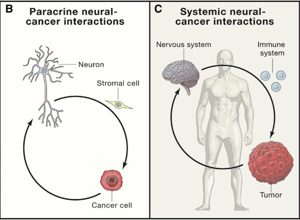 """The """"Emerging Field of Cancer Neuroscience"""""""